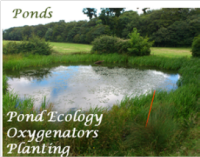 pond surveys and water quality testing